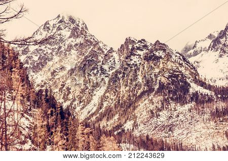 Spruce forest after natural disaster and snowy peaks in High Tatras mountains Slovakia. Winter natural scene. Red photo filter.