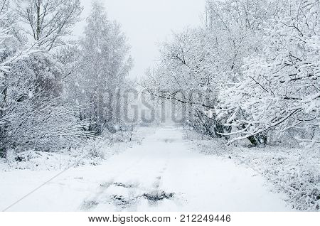 Winter road through snowy forest with snowflakes on the tree branches. Snowfall. Winter landscape.