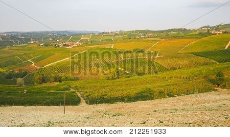 Panoramic view of famous vineyards of Piedmont in Langhe Monferrato and Roero territory