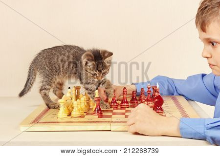 Little grandmaster with a striped kitten plays chess.