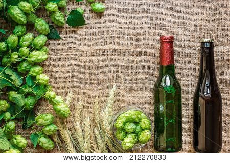 Green Fresh Hops with Wheat and two bottles of beer as copy space frame text area on sackcloth background. Flat lay. Still life. Top view