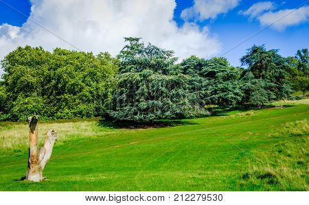 Dead tree trunk in a meadow in front of a tree line in a London park, England