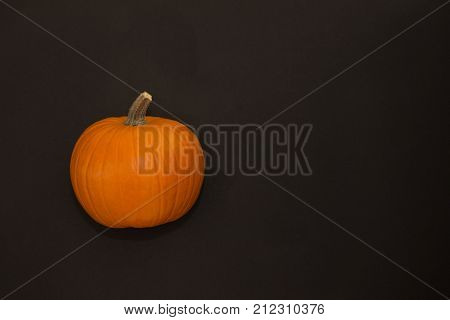 Close up of an orange sugar pumpkin pie pumpkin against a black background. Photographed at eye level.