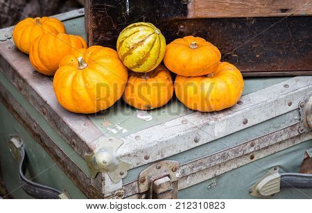 horizontal close up image of an assortment of orange small pumpkins lying on a suitcase.