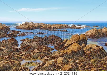 Low tide reveals algae and tide pools at Asilomar State Beach in Pacific Grove on the Monterey Peninsula of California