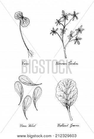 Hand Drawn Sketch Delicious Fresh Green Garden Cress, Common Purslane, Corn Salad and Collard Greens Isolated on White Background.