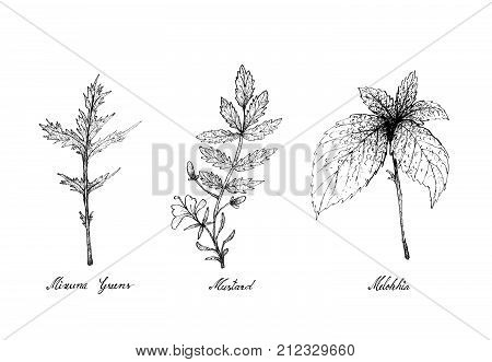 Hand Drawn Sketch Delicious Fresh Green Mizuna Greens, Mustard and Melokhia Plants Isolated on White Background.