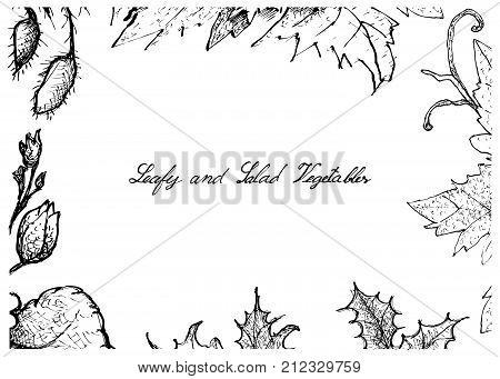 Vegetable Salad, Illustration Frame of Hand Drawn Sketch Delicious Fresh Green Leafy and Salad Vegetable Isolated on White Background.