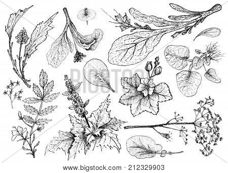 Vegetable Salad, Illustration of Hand Drawn Sketch Delicious Fresh Green Leafy and Salad Vegetable Isolated on White Background.
