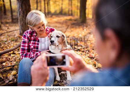 Active senior couple with dog on a walk in a beautiful autumn forest. Unrecognizable man taking photograph of a woman with dog with a smartphone.