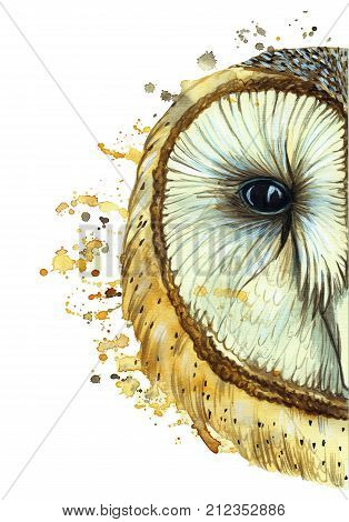 watercolor drawing of an animal predator bird owl, common owl, portrait of an owl, white owl, feathers, white background for decor and decoration, for embroidery
