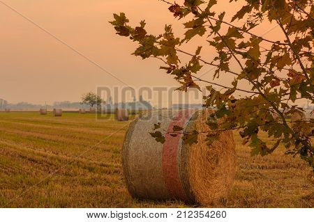cylindrical bales of hay called round bales packed in colored nets /close-up of a hay cylindrical bale in a field at a sunset
