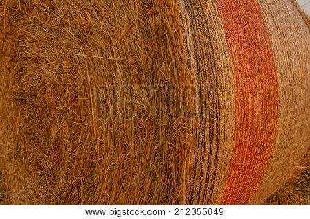 cylindrical bale of hay called round bale packed in colored nets /close-up of a hay cylindrical bale in a field