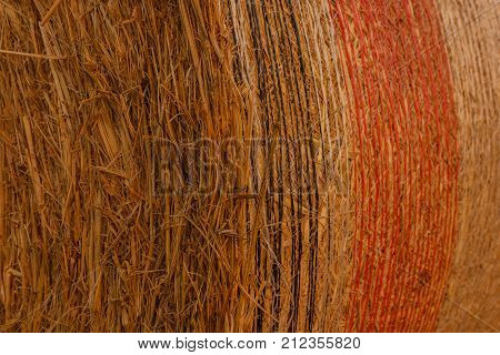 pattern of a cylindrical hay bale packed in colored nets /close-up of a hay cylindrical bale in a field