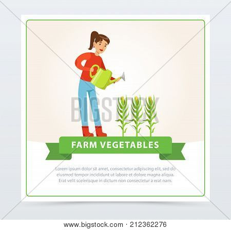 Happy woman farmer cartoon character watering corn plants. Growing vegetables. Fresh farm products. Organic eco food. Farmer and gardener agriculture concept. Flat vector for banner or card design.
