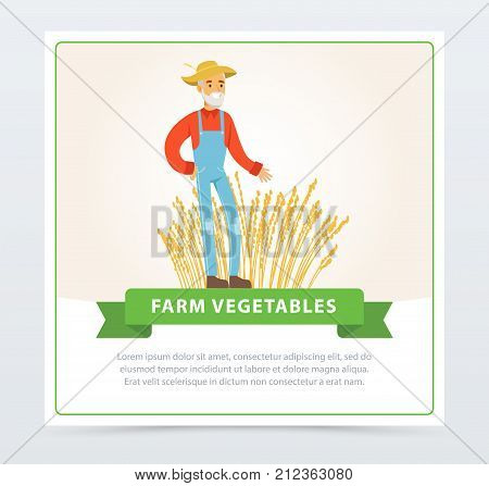 Happy old farmer stands in front of wheat field. Farm vegetables banner. Local products. Organic eco food. Wheat cultivation. Farmer and gardener agriculture concept. Vector flat cartoon man character