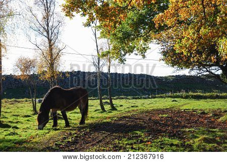 Grazing horse in a colorful landscape by fall season