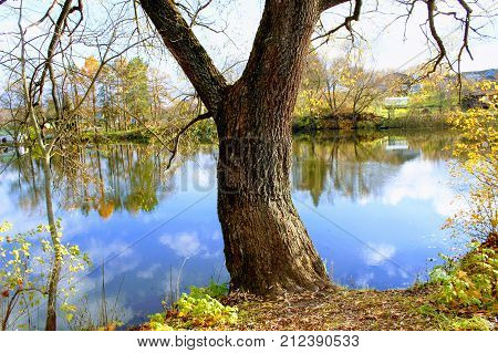 An old tree on the shore of a pond in the estate of Leo Tolstoy in Yasnaya Polyana.