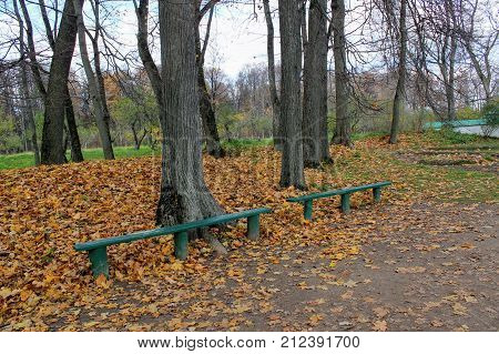 Branch of a tree with yellowed leaves in the park in the estate of Count Leo Tolstoy in Yasnaya Polyana.