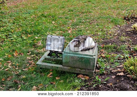 The cat lies on the street lighting of the building in the estate of Count Leo Tolstoy in Yasnaya Polyana.