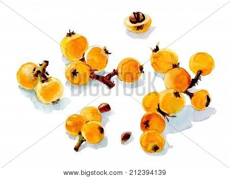 The some berry of loquat on a white background