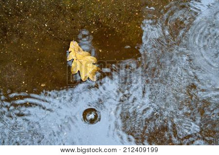 One oak leaf in a puddle on the asphalt. Autumn rain. View from above