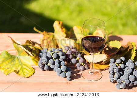 One Glass Of Red Wine With Autumn Grapes Arround