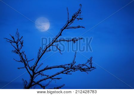 Scary frozen branches with full moon