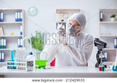 Scientist doing animal experiment in lab with rabbit