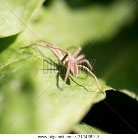 spider in nature. macro . In the park in nature