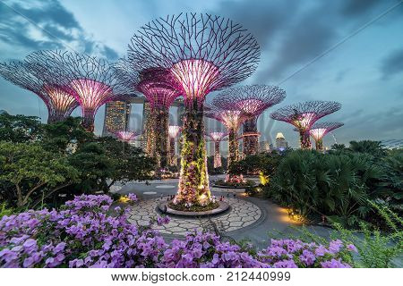 SINGAPORE- April 25: Night view of The Supertree Grove at Gardens by the Bay on April 25, 2015 in Singapore.