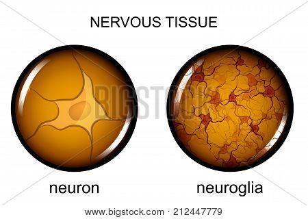 vector illustration of nervous tissue. neuron and neuroglia