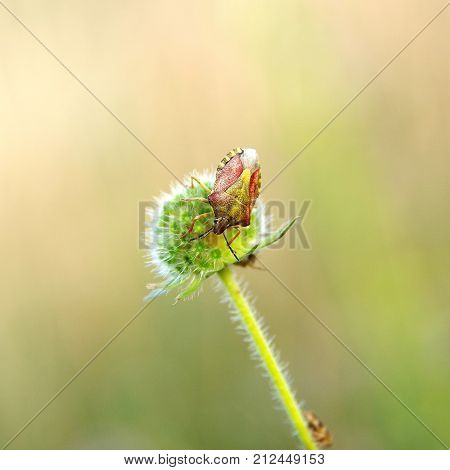Heteroptera on a plant on green background
