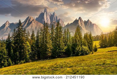 Forest In Mountains With Rocky Peaks At Sunset
