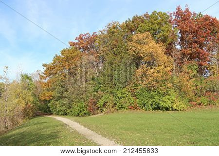 Though the calendar says it is November a walk in the park in southeastern Michigan makes it hard to believe. Too many of the leaves which should have changed to the burnished colors of autumn are still green and the nicely mown grass is still thriving.