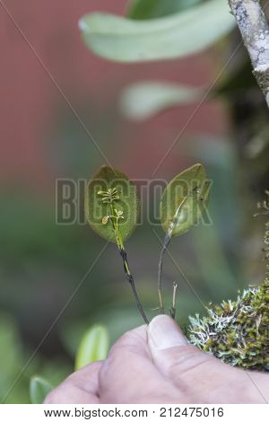 Tiny Rainforest Orchids in the Monteverde Cloud Forest in Costa Rica