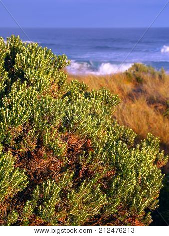 Beautiful coastline along the Pacific coastline of Warrnambool Australia