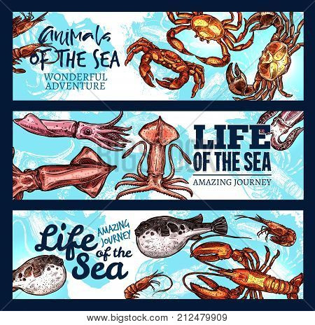 Sea life sketch banners of ocean seafood mollusk or tropical fishes and crustacean animals. Vector design of squid, exotic fish or cuttlefish and octopus or lobster crab and shrimp in oceanarium