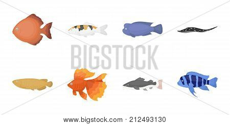Different types of fish icons in set collection for design. Marine and aquarium fish vector symbol stock  illustration.