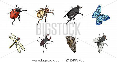 Different kinds of insects icons in set collection for design. Insect arthropod isometric vector symbol stock  illustration.