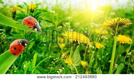Ladybug on background of grass and beautiful spring flowers.