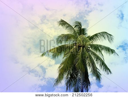 Coco palm tree crown on cloudy sky. Tropical nature vintage toned photo. Single coco palm with fluffy leaf. Coco palm leaf banner template with text place. Tropical island travel. Vintage palm poster