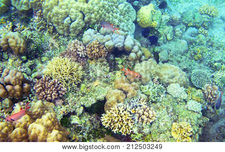 Underwater landscape with tropical fish. Coral diversity. Exotic island shallow water wildlife. Seashore landscape underwater photo. Coral reef life. Sea nature. Sea fish in coral. Coral landscape
