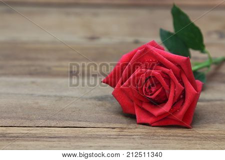 Single Red rose with waters drops on roses petals on wooden background. copy space for text.