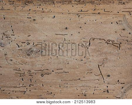 Brown Worm Eaten Wood Texture Background