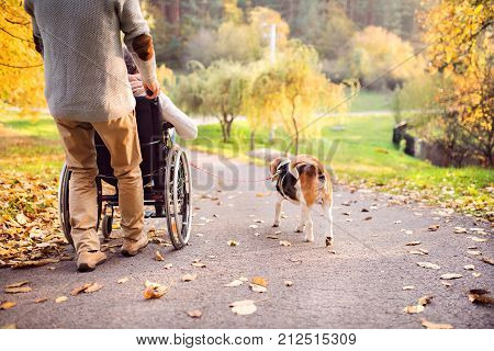 Unrecognizable senior man and elderly woman in wheelchair in autumn nature. Man with his mother or a wife on a walk with a dog.