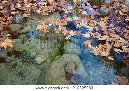 autumn leaves in a water. fall background