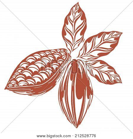 cocoa logo in styles free hands cocoa bean kako leaves hand-drawn white background retro style cocoa fruits