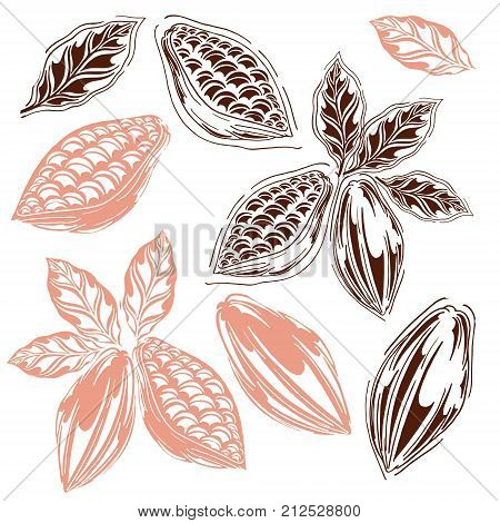 set of cocoa in styles free hands cocoa bean kako leaves hand-drawn white background retro style cocoa fruits