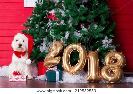 Decorated west highland white terrier dog as symbol of 2018 New Year with red bow tie decorative bows and santa hat and green christmas pine tree with gifts and gold 2018 numbers on background